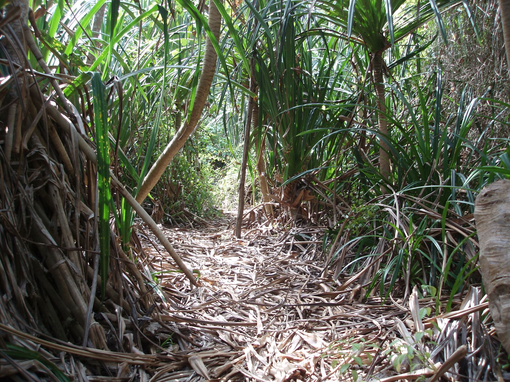 Xmas jungle trail ... their CD Audio Sound to get a Musical Fidelity X 10 V3 Tube Buffer (even ...